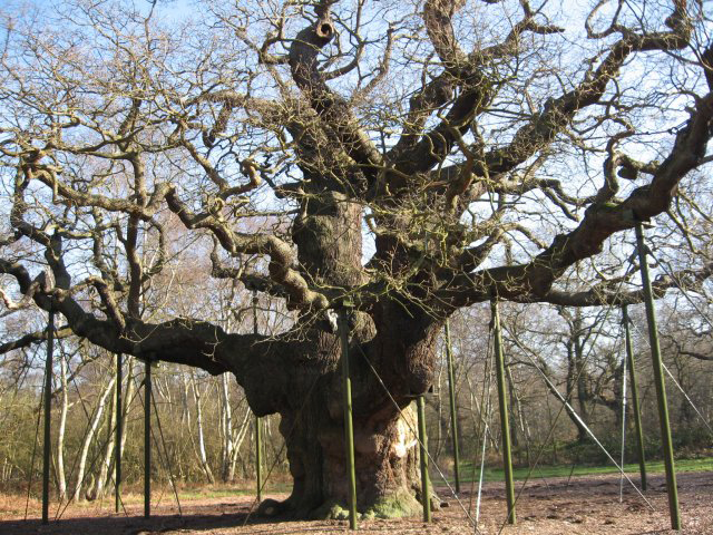 2020-02/major-oak-in-sherwood-forest-credit-john-palmer
